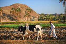 گردشگری راه نجات سیستان و بلوچستان است/صنایع دستی را برند کنید