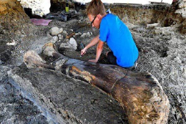 استخوان ۲ متری دایناسور ۱۴۰ میلیون ساله کشف شد