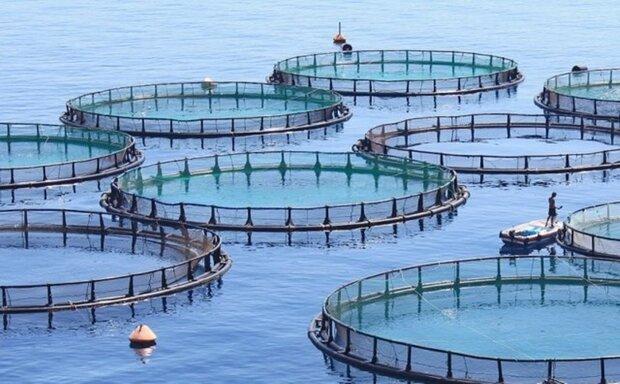200 شركة معرفية إيرانية تعلن استعدادها لتلبية احتياجات صناعة الاستزراع المائي