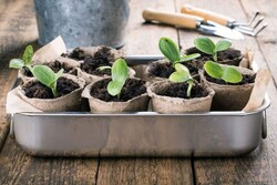 ۱۰ میلیون شاخه گل و گلدان زینتی در گلخانه هایآبیک تولید شد
