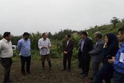 روستای زیارت مستعد کشت زعفران و گیاهان دارویی