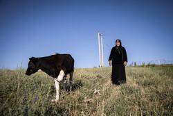 ۵۰ درصد اقتصاد عشایر وابسته به فعالیت زنان است