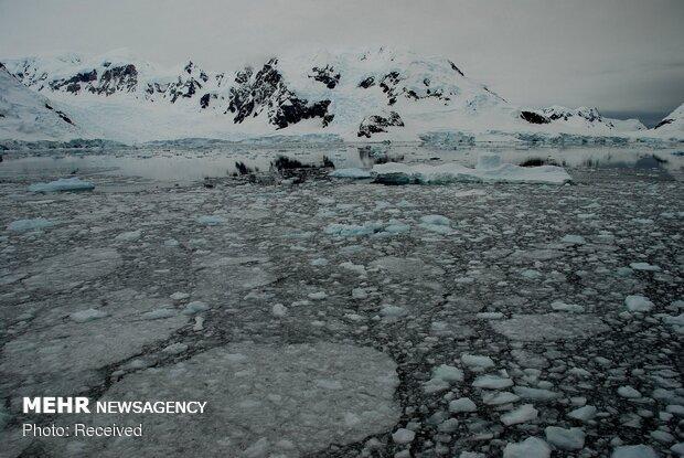 Dünyanın Dibi Antarktika'dan kareler