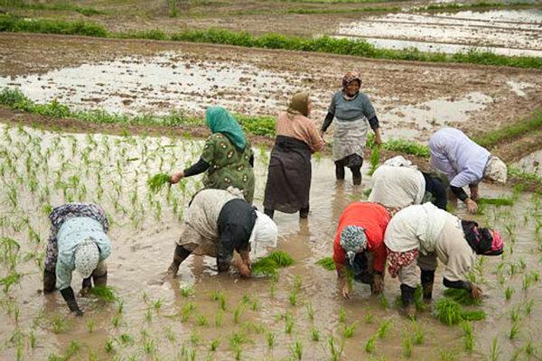 تولید ۱۰۰ محصول کشاورزی توسط زنان درباغچه های خانگی آغاز می شود