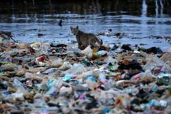 چه جاندارانی بیشترین آسیب را از زبالههای پلاستیکی میبینند؟