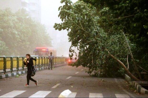 پیشبینی وزش باد شدید با احتمال بروز خسارت در مشهد