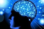 برگزیدگان مسابقه آزمایشگاه نقشه برداری مغز معرفی شدند