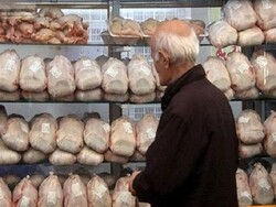 کشف بیش از ۸ تن مرغ زنده قاچاق در نهاوند