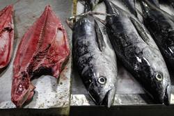 ساختار سه بعدی پروتئین ۲ ماهی ایرانی شناسایی شد