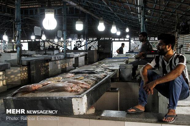 Fish Market in Bandar Abbas
