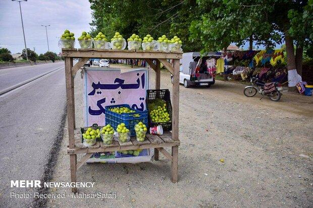 اين تجد الذّ التين في ايران؟