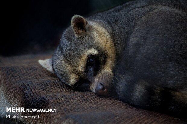 حیوانات نجات یافته کلمبیا