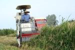 پیشبینی برداشت ۴۰ هزار تُن برنج در لرستان/ ۲۵۰ دستگاه کمباین آماده شد