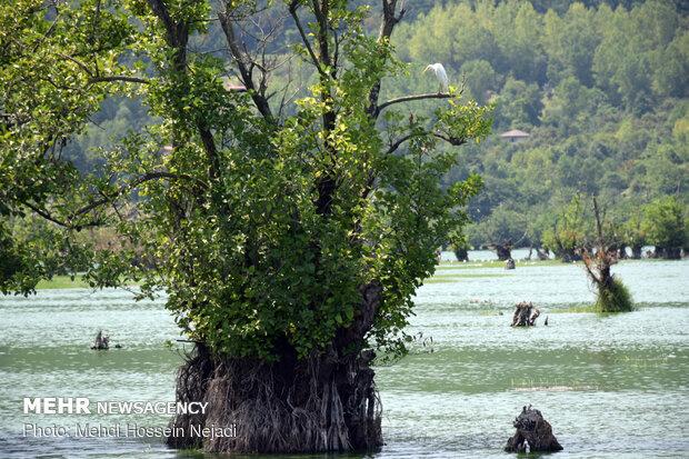 Astara's Estill Lagoon