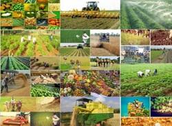 بهره برداری از ۲۶۱۶ طرح عمرانی و تولیدی بخش کشاورزی