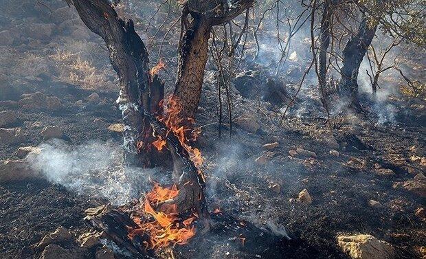 آتشسوزی مراتع کنگاور اطفا شده است