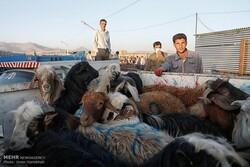 سامان دهی ۶۱ اکیپ برای بازرسی میادین دام در خراسان شمالی