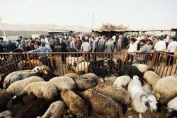 People trading at livestock market ahead of Eid al-Adha festival in Hamedan