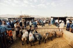 قیمت عرضه دام زنده در عید سعید قربان ۴۷ هزار تومان است / نظارت بر کم فروشی