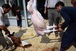 ۳۳ قربانگاه برای ذبح قربانی در آذربایجان غربی دایر شد
