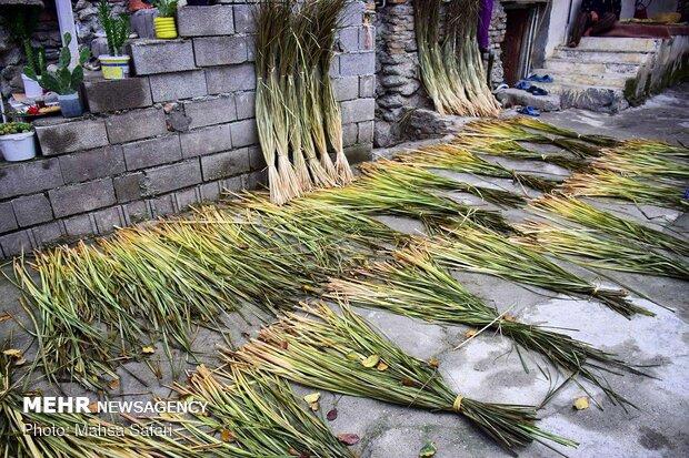 Mat weaving in Iran's Golestan