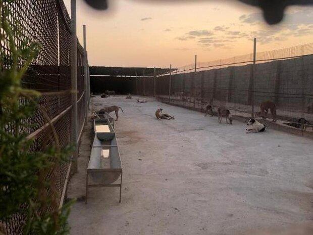 کمپ سگهای بلاصاحب بوشهر به امکانات اساسی تجهیز شد