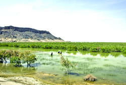 Hamoun wetland restoration plan prepared