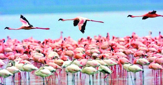 'Miankaleh peninsula under serious threats'