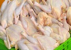 سه تن مرغ گرم در گناوه توزیع می شود