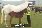 """جشنواره زیبایی """"اسب ترکمن"""""""