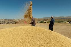 نرخ خرید تضمینی گندم رسما ٢٢٠٠ تومان شد/قیمت خرید محصولات زراعی