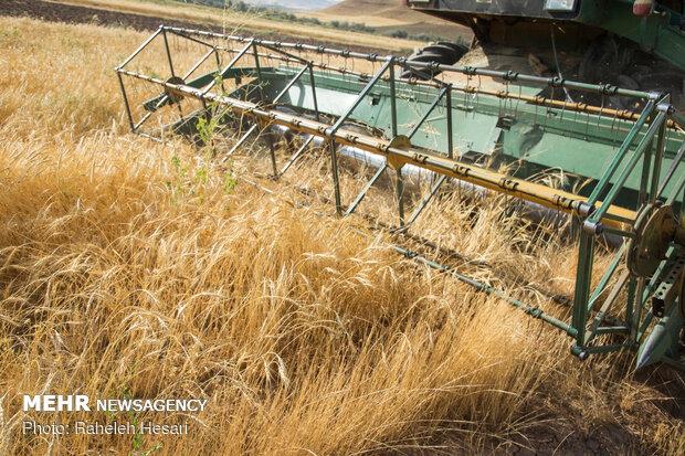 کشت گندم در سطح ۶ میلیون هکتار/جدول افت مفید و غیرمفید تغییر کرد