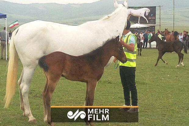 ترکمن گھوڑوں کا خوبصورت فیسٹیول