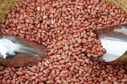 توقیف ۳ تن بادام زمینی قاچاق در همدان