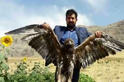 رها سازی ۵ بال کبک و یک بهله عقاب طلایی در طبیعت شهرستان دلفان