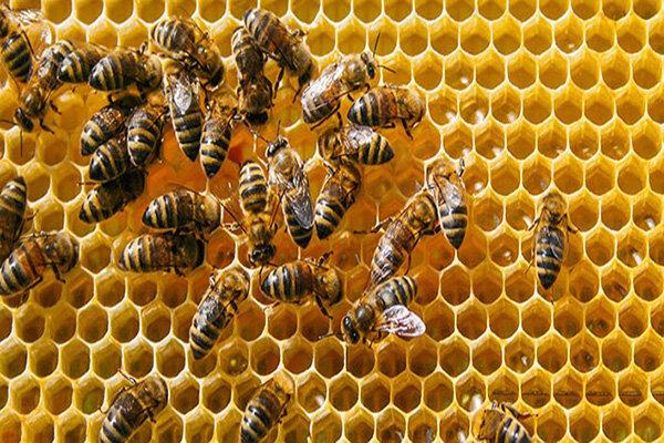 برخی از خواص عسل