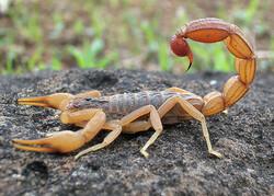 Venomous animals kill 10 since March