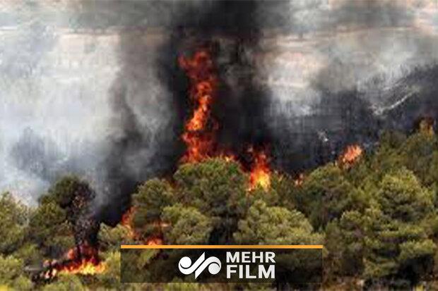 آذربائيجان کے ہیرکانی جنگلات میں آگ لگ گئی