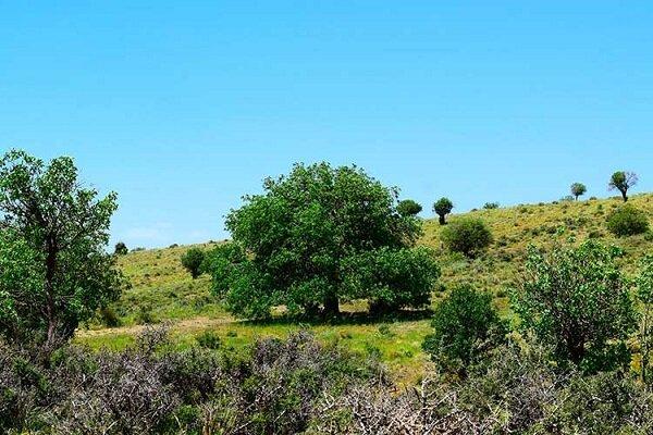 مبارزه با بیماریهای جنگلی در سطح ۷۵ هکتار از اراضی پاسارگاد