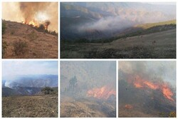 ۳۰۰ هکتار از جنگلهای ارسباران در آتش سوخت