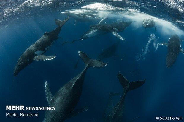 برندگان مسابقه عکاسی طبیعت 2019 استرالیا