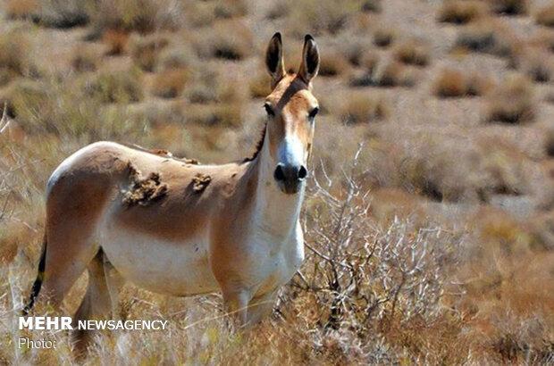 Most unique biodiversity: a glimpse at Iran's north-central national parks