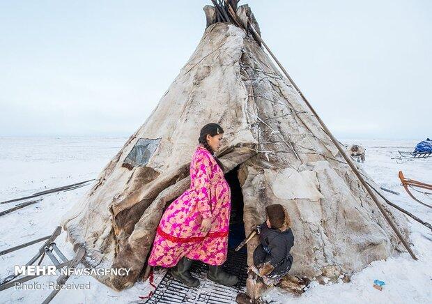 Kuzey Kutup