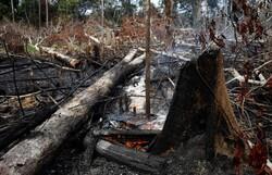 وقوع آتشسوزی در منطقه سرخ دره جنگل ابر/ ۳ اکیپ امدادی اعزام شدند