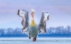 الصور الفائزة بمسابقة تصوير الطيور / صور
