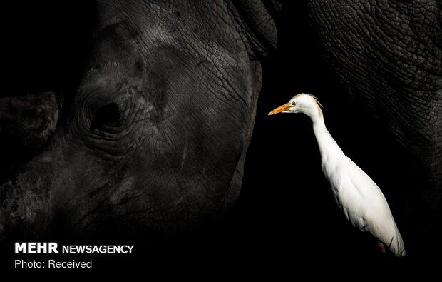 الصور الفائزة بمسابقة تصوير الطيور
