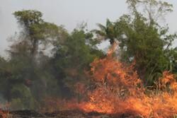 آتش سوزی گسترده در طارم/وزش باد عامل توسعه آتش است