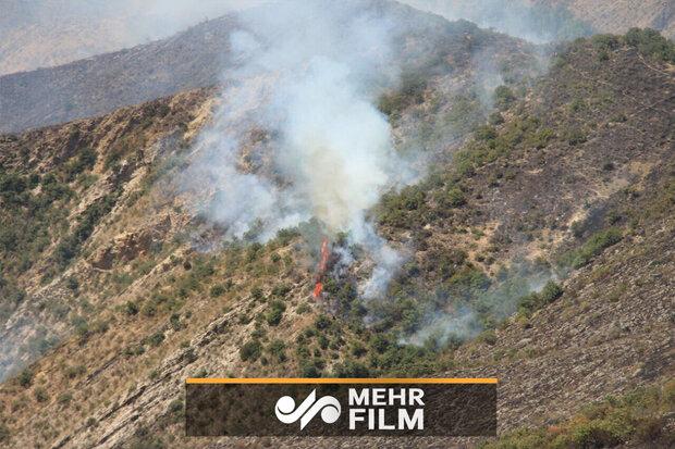 انتقاد تند علی ضیاء از اطفای آتش سوزی جنگلهای ارسباران