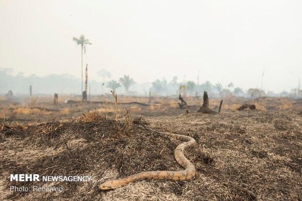 Amazon ormanlarındaki yangın devam ediyor