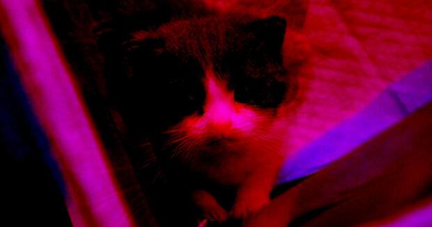 شبیه سازی حیوانات خانگی با هدف انتقال حافظه